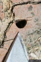 D-shaped exit holes